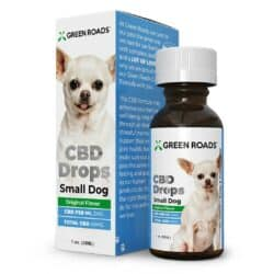 CBD Oil for Small Dogs