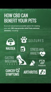 How Can CBD Benefit Your Pets